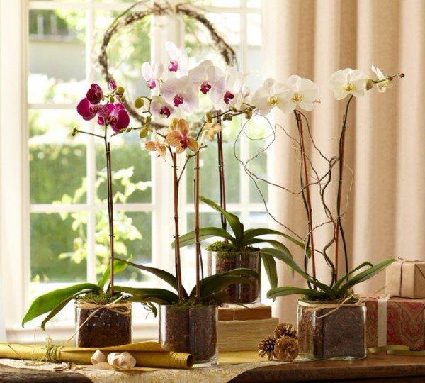 Именно это растение в доме гарантирует согласие, семейное счастье, радость рождения детей.