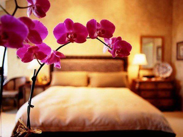 Изысканная орхидея вдохновит творческую личность