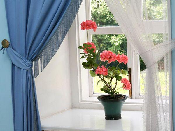 Какие цветы можно выращивать в спальне: герань – один из вариантов.