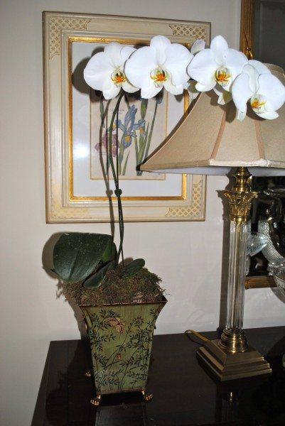 Красота орхидеи зависит от правильного ухода.