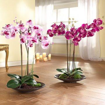 На фото: единую цельную композицию составят орхидеи одного цвета разной насыщенности.