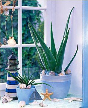 Оригинальное и ненавязчивое решение – алоэ на подоконнике: растениям нужно много света.
