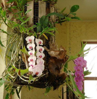 Подвесное открытое кашпо с орхидеей – яркий акцент дизайна.