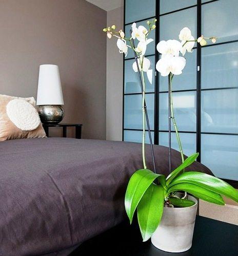 Сейчас модно украшать спальню цветущими орхидеями, их прелесть полностью соответствует атмосфере данной комнаты.