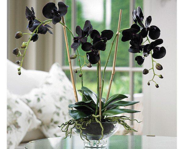 Темный и насыщенный тон цветка, несомненно, привлечет к себе наш взор.