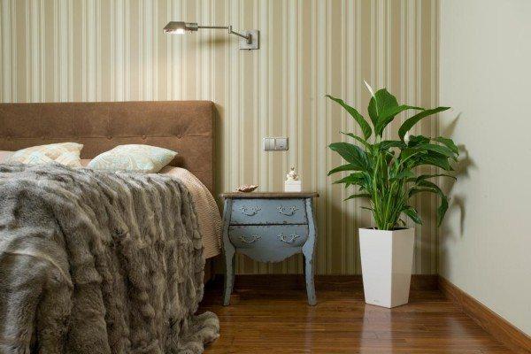 Устраняет вредные вещества Спатифиллум, оздоравливает атмосферу и содействует спокойному сну.